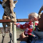 Feeding the giraffes before they play on 9 acres