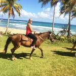 Ride on quality horses on the sand