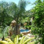 Littlewood Garden - Garden and Pool
