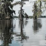 This if what it is truly like to tour a swamp!