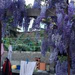 Wisteria framing the outdoor kitchen