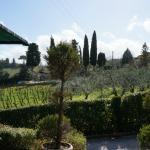 Vineyards - Raccianello