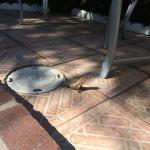 Near jacuzzi, lizard sunbathing
