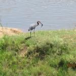 Foto de La Kruger Lifestyle Lodge