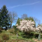 The wonderful garden!