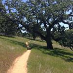 The winding spring trail