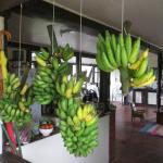 yes we grow bananas
