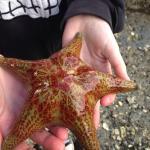 Star fish:)