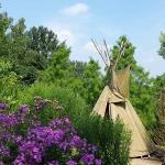 Tipi with surrounding bushes