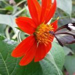 In the butterflygarden