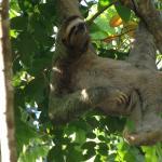 Foto de La Posada Private Jungle Bungalows