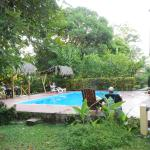 Pool is surrounded by beautiful, natural flora and foliage.