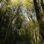 Edward State Park Hike
