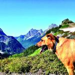 Hiking trails at Mt. Baker