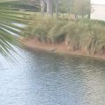 Walking from registration bldg toward our villa.  Small lagoon, w/ a 'gator