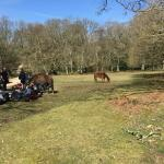 New Forest and the horses