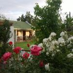 View of cottage through the roses