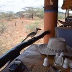 Foto de Samburu Sopa Lodge