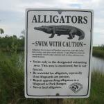 The alligators ate before we came! Nevertheless I prefered to take a swim in the sea!