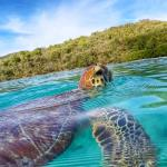 Swimming with turtle