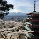 During Cherry blossom season at Mount Fuji