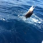 Hot Pacific Sailfish
