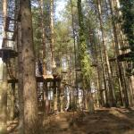 Woods with a range of aerial walkways