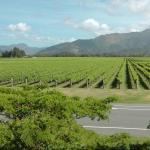 Marlborough Wine Tours Foto