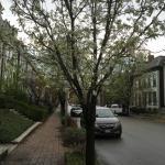 Lafayette Square neighbourhood - worth the walk!