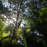 The balcony rainforest