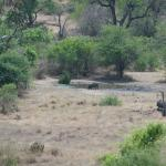 Photo of Leopards View Game Lodge
