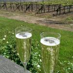 View of the vineyard from our private deck with our complimentary sparkling wine