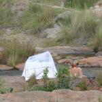 Foto de Makweti Safari Lodge