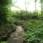 The woodland dell at The Ridges
