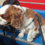 Even pets are allowed. My little man loved his ride on thr sand train :)
