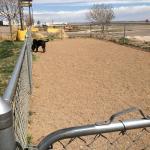 Small fenced dog run
