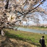 Spring scenery 2