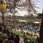 Spring scenery 3