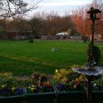 Back garden area