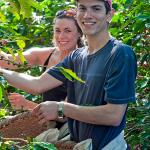 Guests picking organic coffee at our plantation