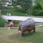 esculturas de hipopótamos