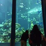 東海大学海洋博物館