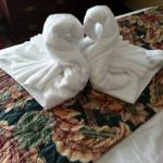 the swans on our bed