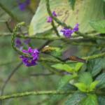 Mariposa-nature