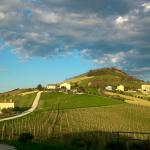 Local winery view Fermo
