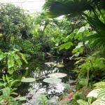 intérieure des serres tropicales