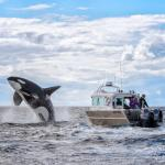 Whale Watching Advenure Tours