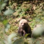 Fall Grizzly Bear Expeditions