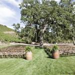 Triunfo Creek Vineyards Foto
