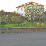 сады лимонов